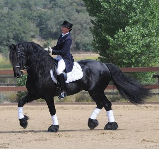 Monte 378 Sport