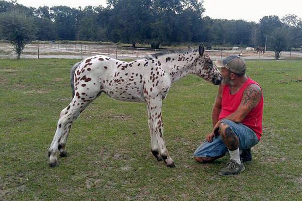 RTD's Dreams Coming True, Scarlett's Foal